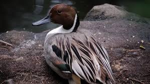Migratory Birds – Disney Animals