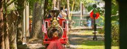 Pioneer Train