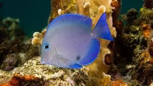 Reef Fish – Disney Animals