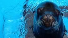 Sea Lion Presentations