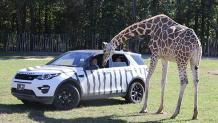 Various Safari Tours