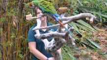 Wildlife Experience Show